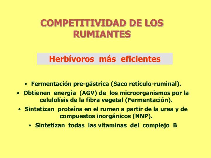 COMPETITIVIDAD DE LOS RUMIANTES