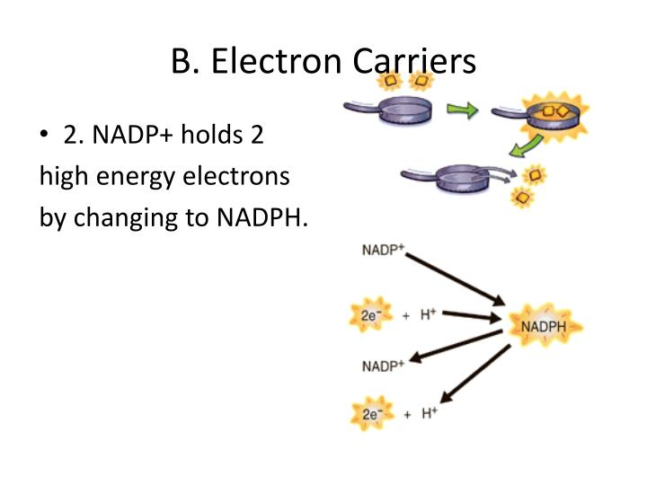 B. Electron Carriers