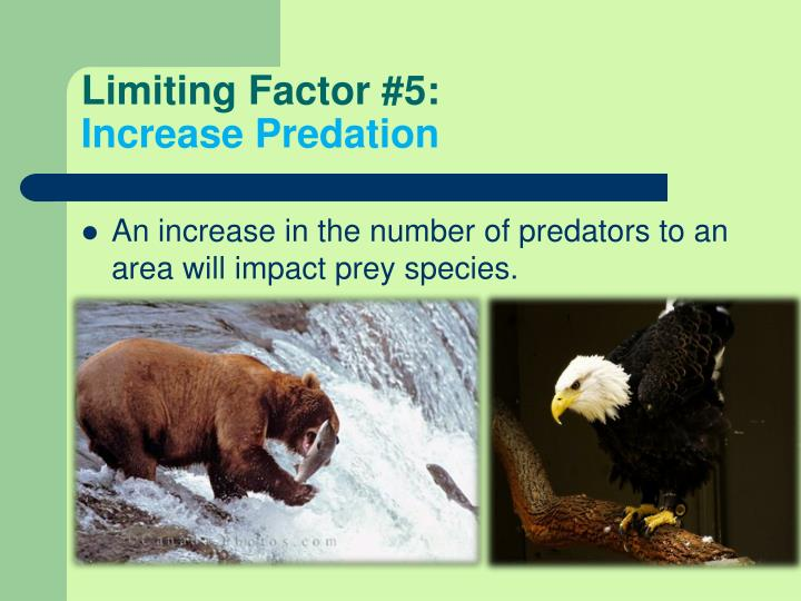 Limiting Factor #5: