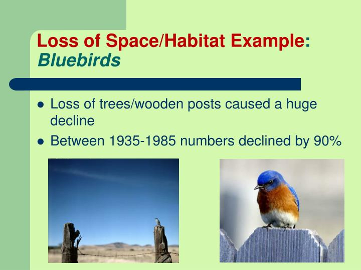 Loss of Space/Habitat Example