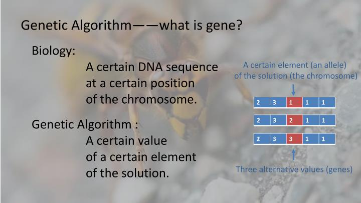 Genetic Algorithm——what is gene?