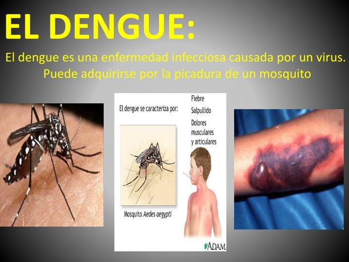 EL DENGUE: