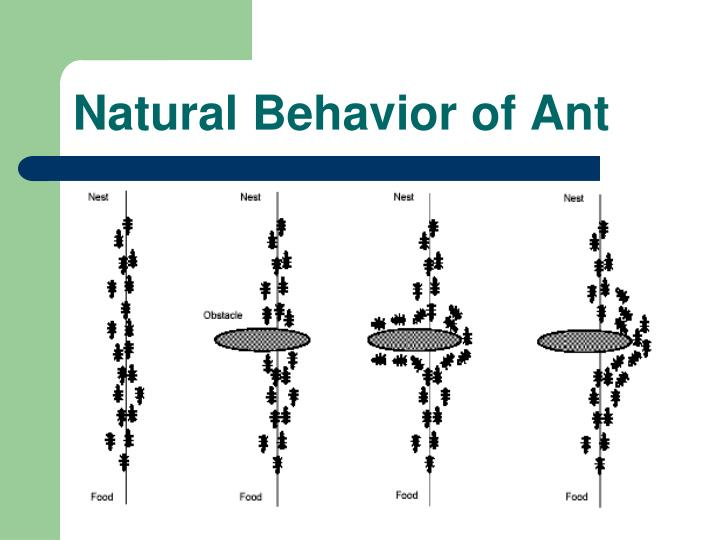 Natural Behavior of Ant