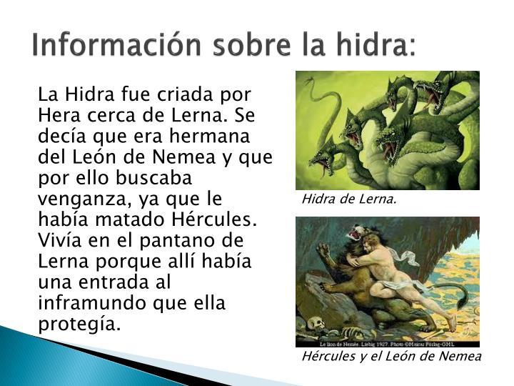 Información sobre la hidra:
