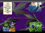 indigo cash crop