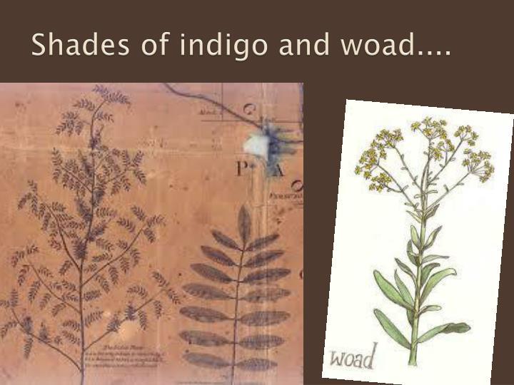 Shades of indigo and woad....