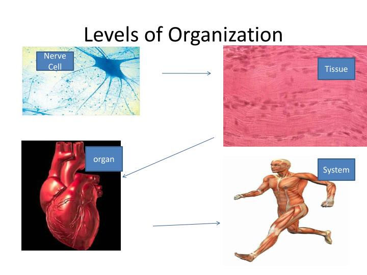 Levels of organization