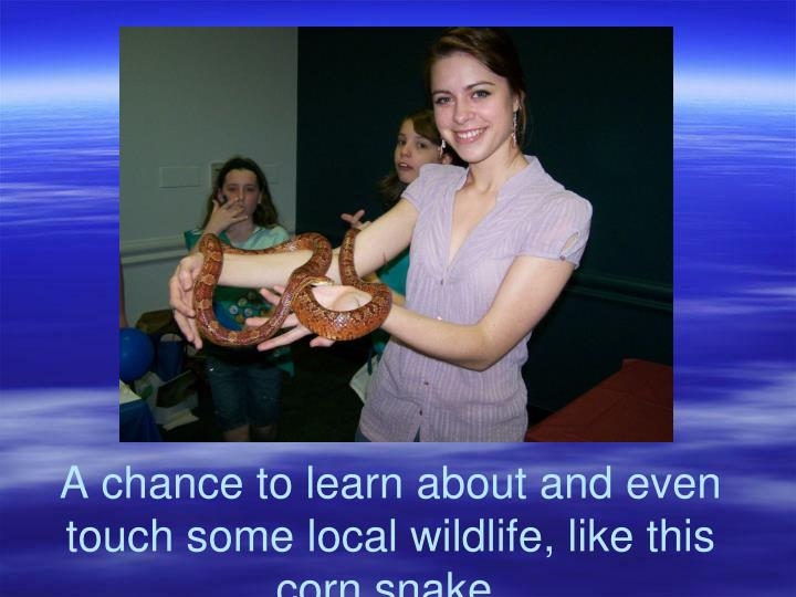 A chance to learn about and even touch some local wildlife, like this corn snake.