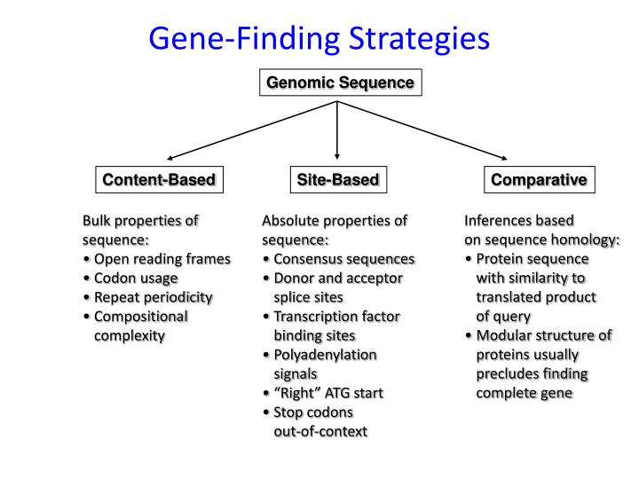 Gene-Finding Strategies