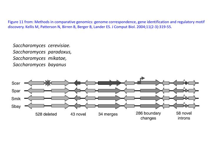 Figure 11 from: Methods in comparative genomics: genome correspondence, gene identification and regulatory motif discovery.