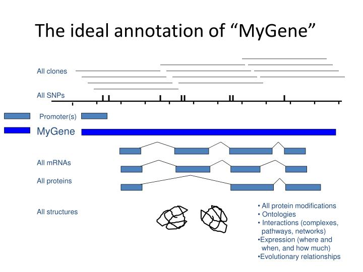 "The ideal annotation of ""MyGene"""