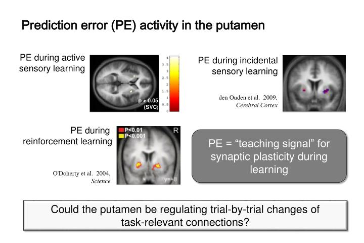 Prediction error (PE) activity in the putamen