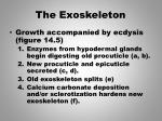the exoskeleton2