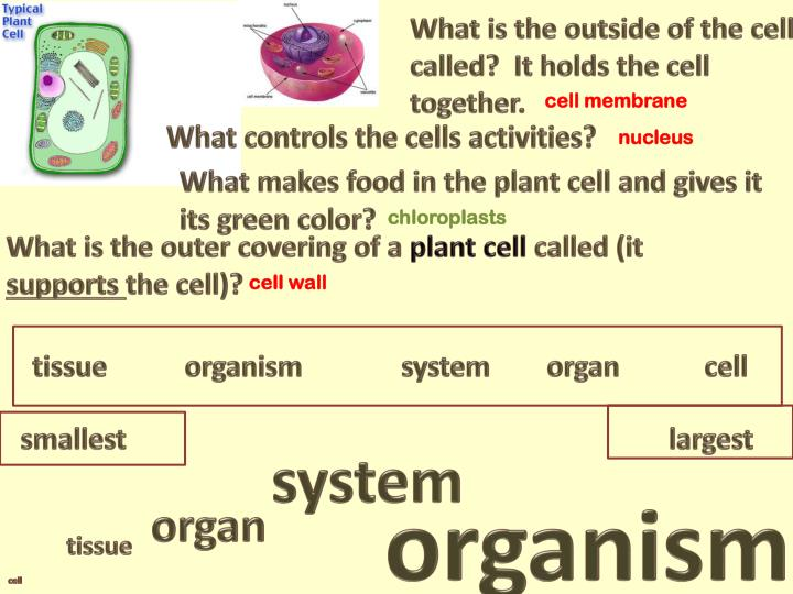 What is the outside of the cell