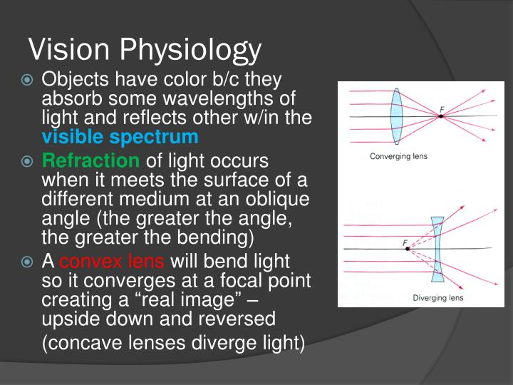 Vision Physiology