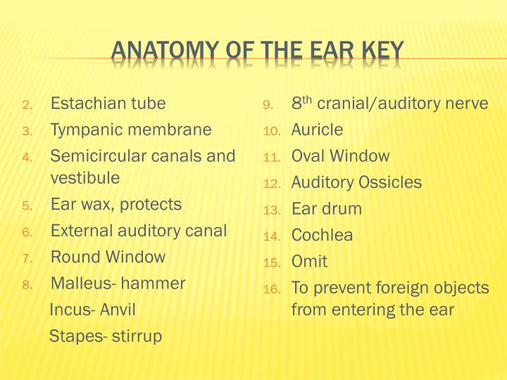 Anatomy of the ear Key