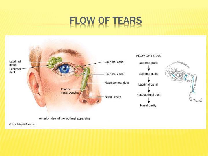 Flow of tears