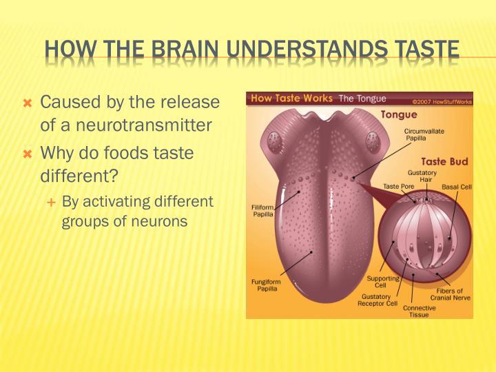 How the brain understands taste