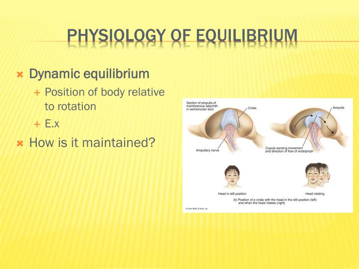 Physiology of Equilibrium