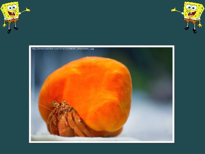 http://farm8.staticflickr.com/7273/7152486307_89de2fe6b4_z.jpg