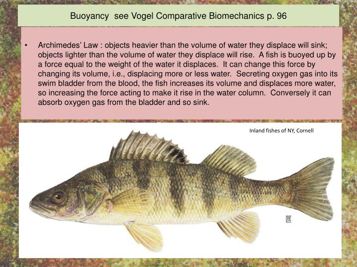 Buoyancy  see Vogel