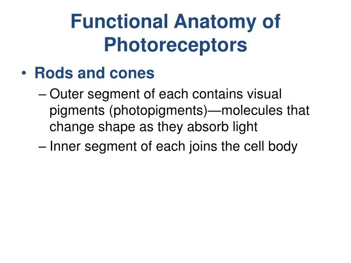 Functional Anatomy of Photoreceptors