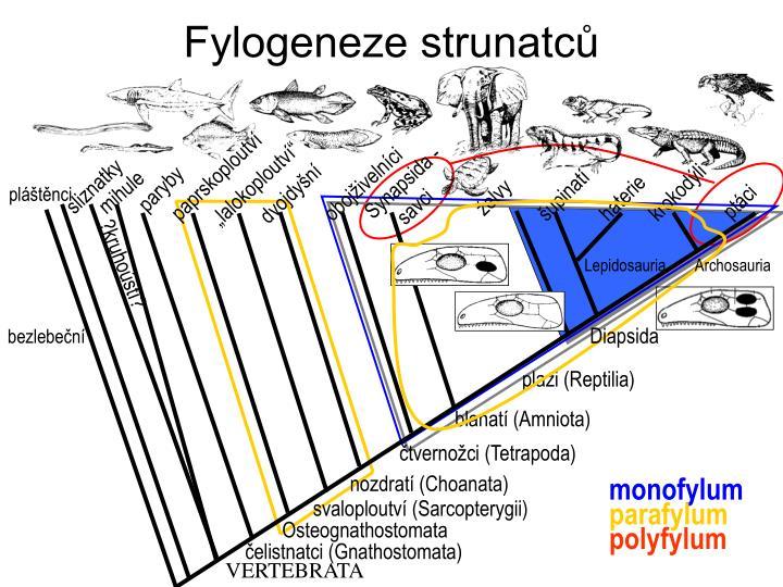 Fylogeneze strunatců