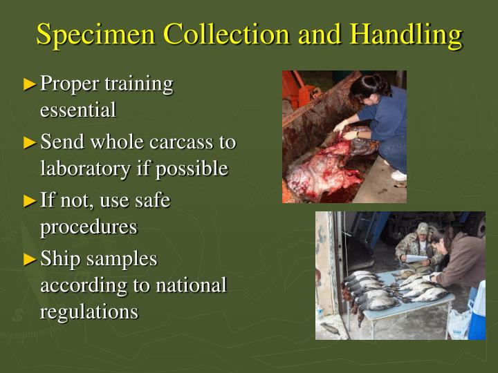 Specimen Collection and Handling