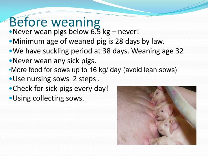 Before weaning