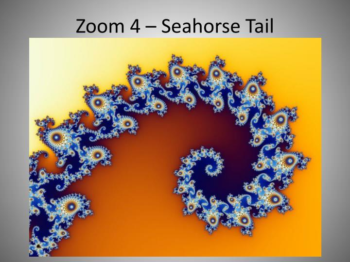Zoom 4 – Seahorse Tail