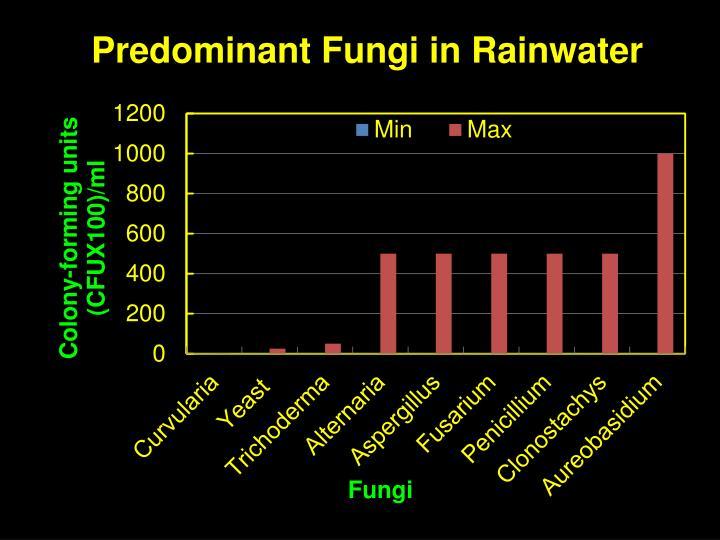 Predominant Fungi in Rainwater