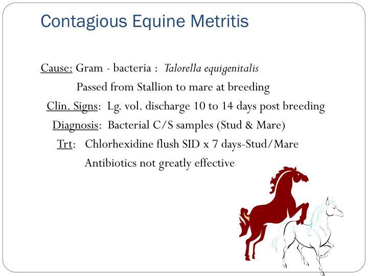 Contagious Equine