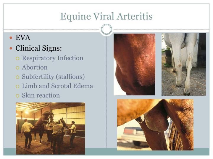 Equine Viral