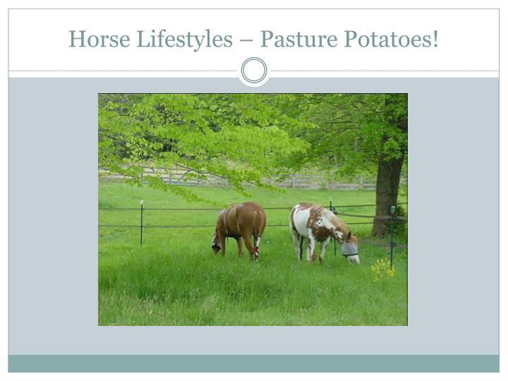 Horse Lifestyles – Pasture Potatoes!