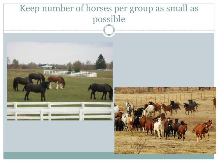 Keep number of horses per group as small as possible