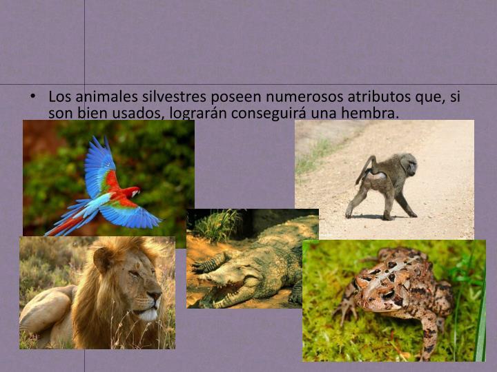 Los animales silvestres poseen numerosos atributos que, si son bien usados, lograrán