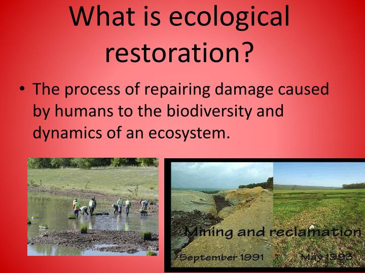 What is ecological restoration?