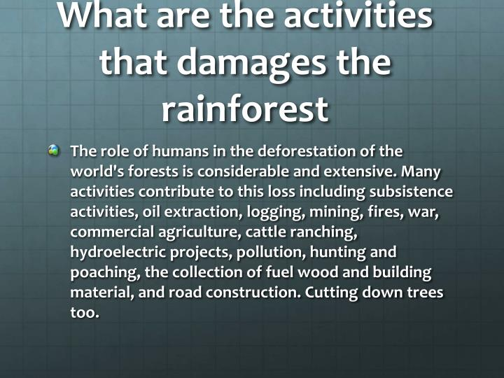 What are the activities that damages the rainforest