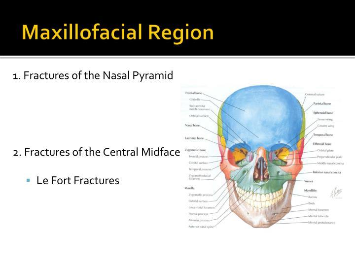 Maxillofacial Region