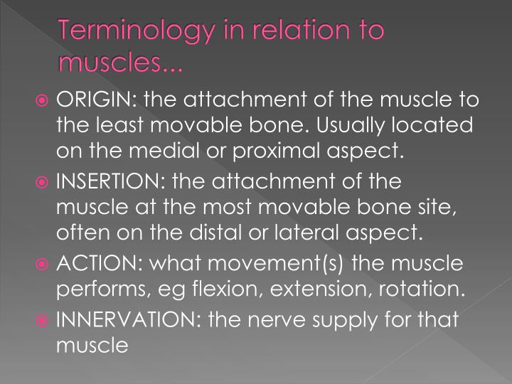 Terminology in relation to muscles...