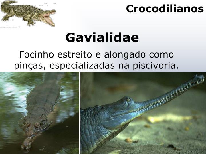 Crocodilianos
