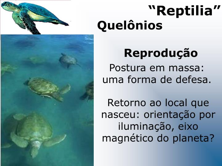 """""""Reptilia"""""""