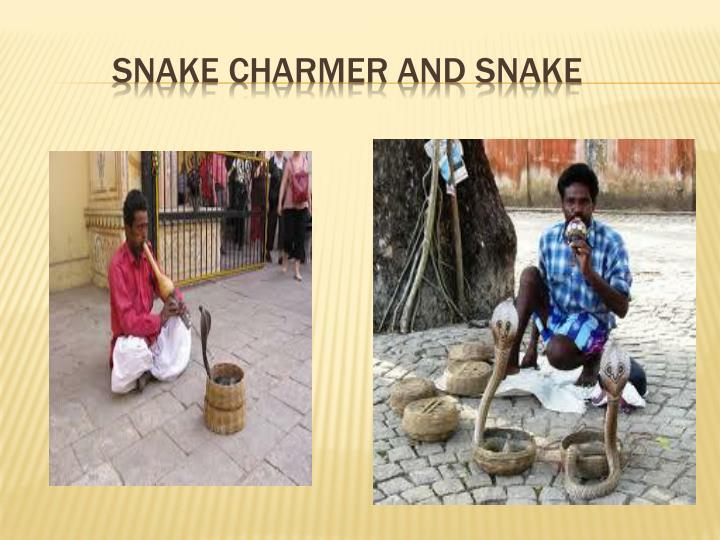 SNAKE CHARMER AND SNAKE