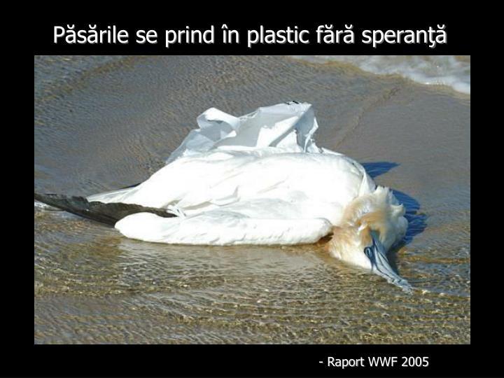 Păsările se prind în plastic fără speranţă