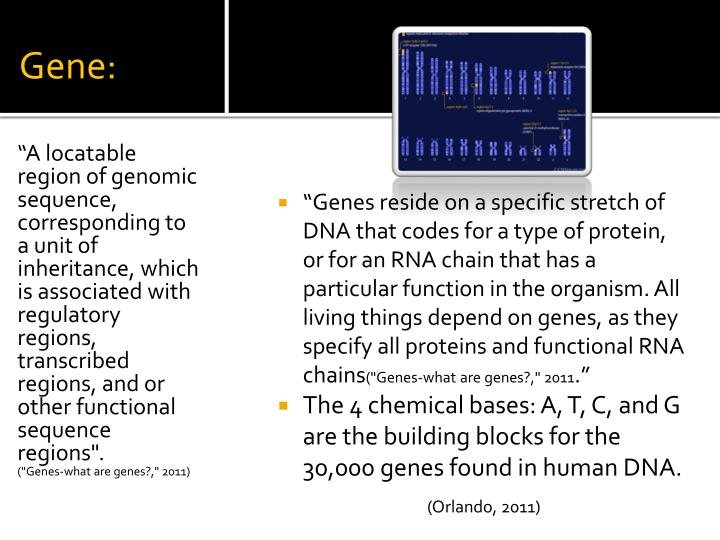 Gene: