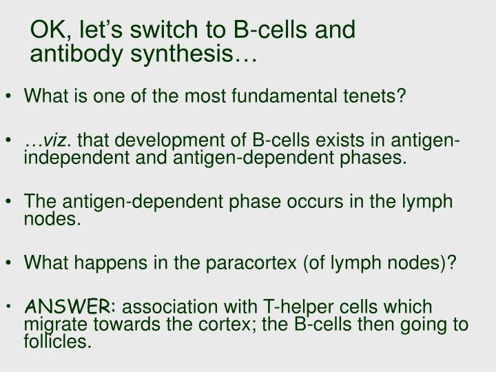 OK, let's switch to B-cells and antibody synthesis…