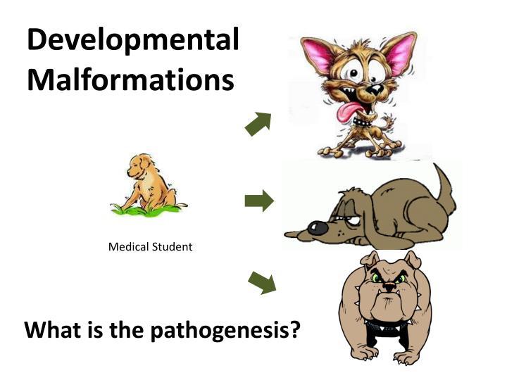 Developmental