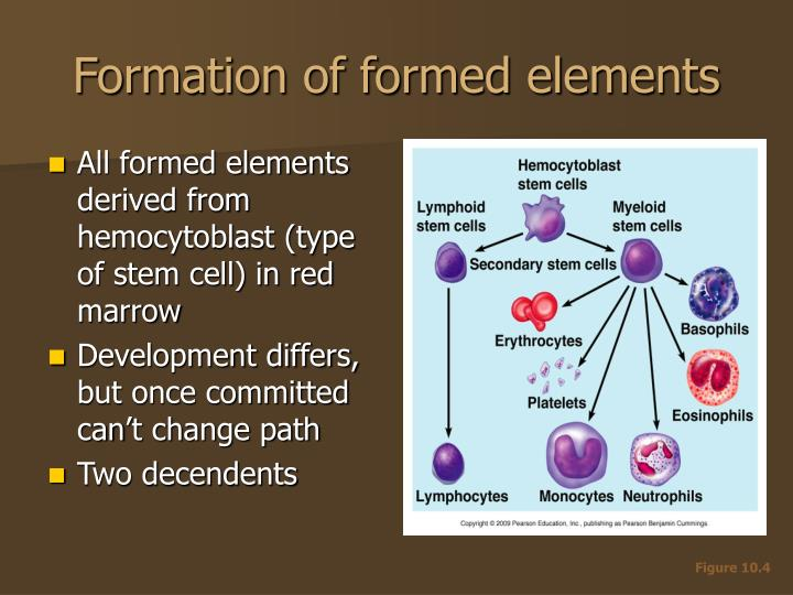 Formation of formed elements