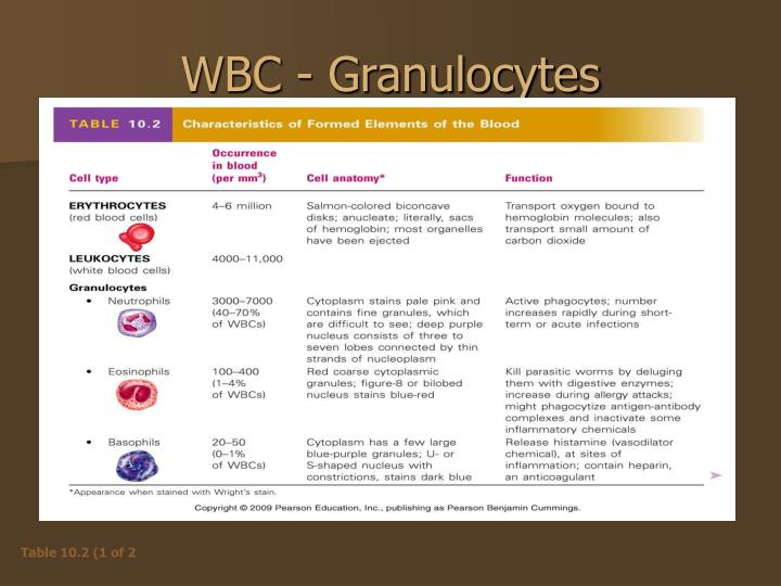WBC - Granulocytes