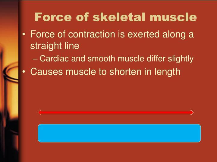 Force of skeletal muscle